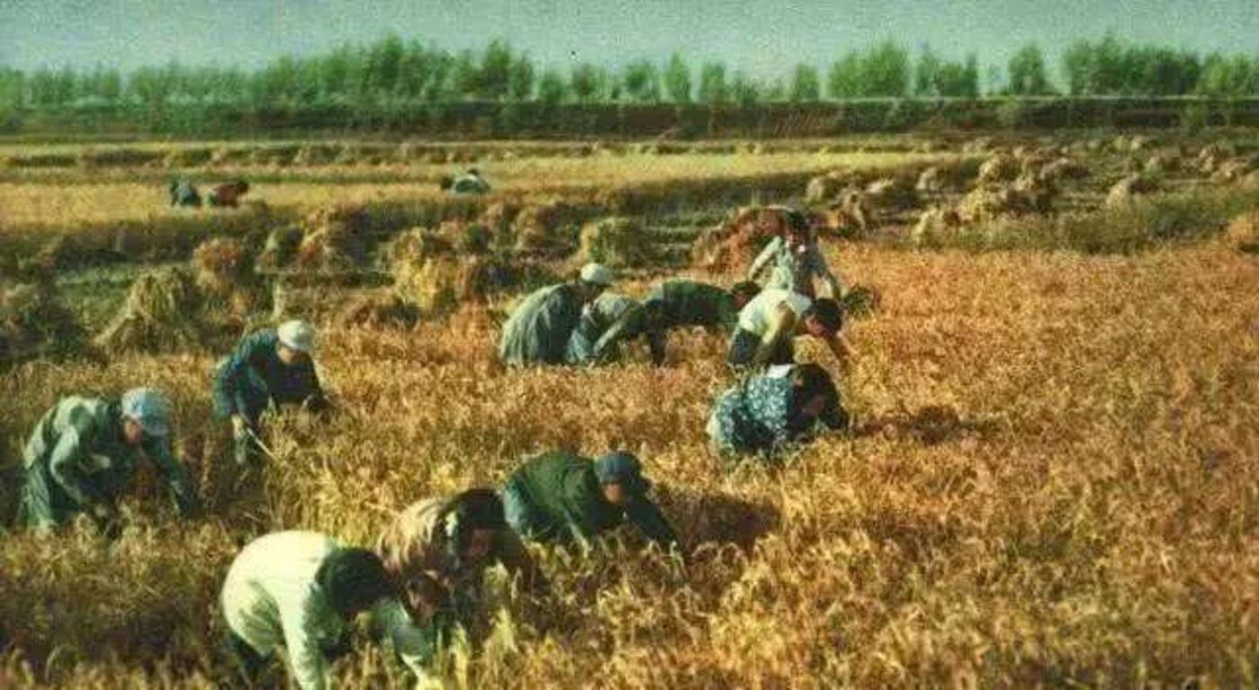 《【天富娱乐登录平台】内卷、二元到内生:农业视角下中国经济发展的逻辑和机遇》