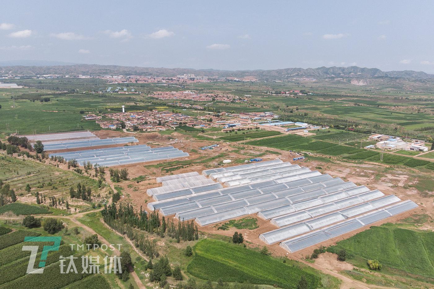 2020年7月31日,张家口市万全区李杏庄村,郝亦成团队的温室树莓基地。这是中国北方特有的大棚,中国40%的设施蔬菜是由这种棚体贡献。
