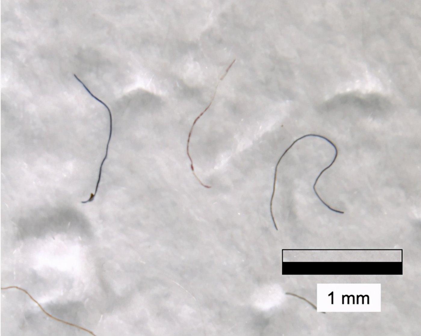 图   珠穆朗玛峰上的微塑料纤维(来源:One Earth)