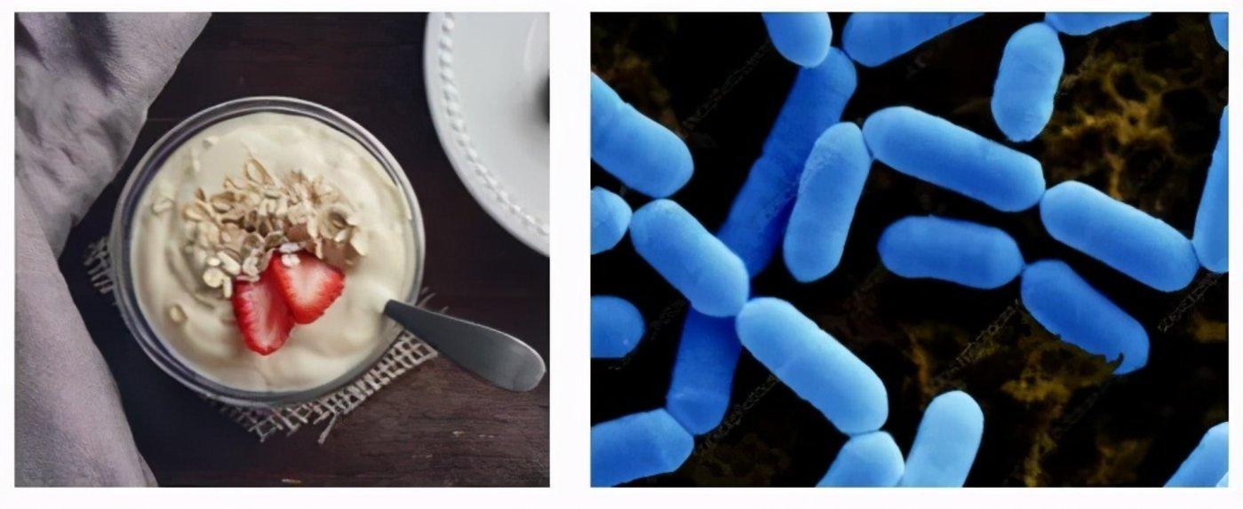 图   酸奶(左)中含有干酪乳杆菌 (右)(来源:Pixabay、Science Photo Library)