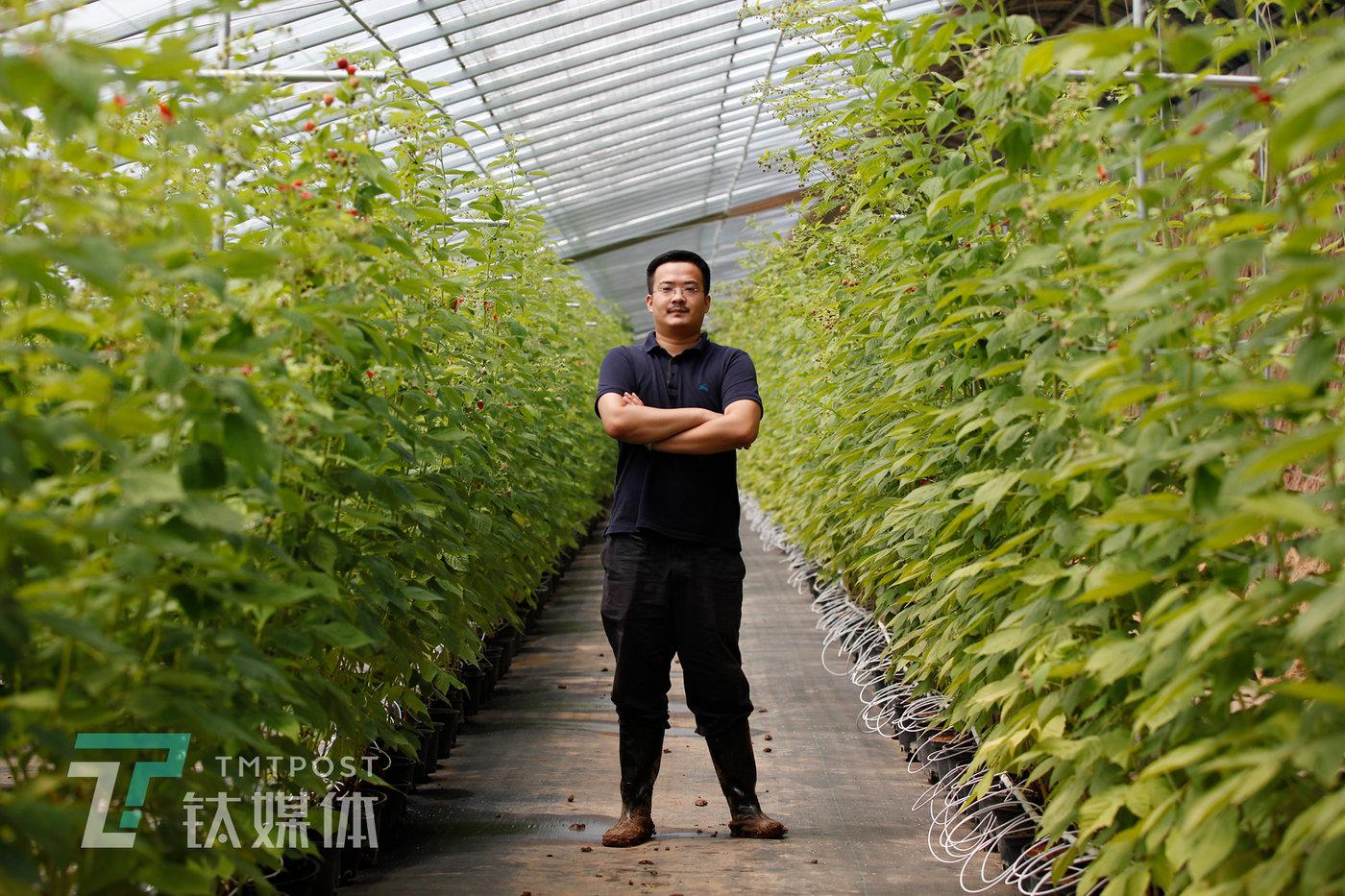 7月31日,郝亦成在树莓温室大棚。