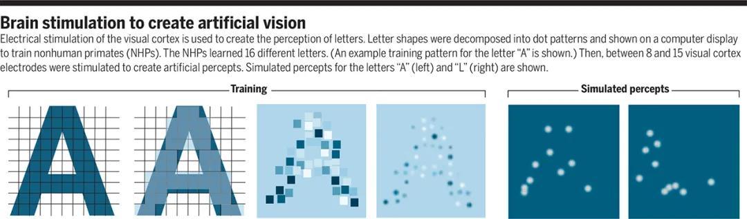 图 | 脑部刺激产生人造视觉(来源:Science)