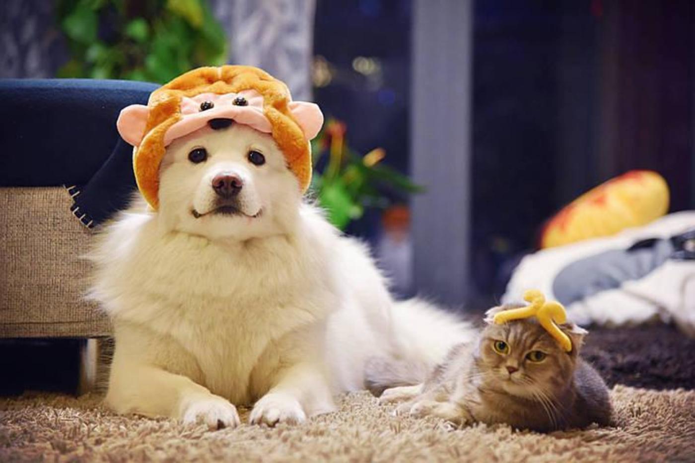 猫和狗开始被当作家庭中不可或缺的一员