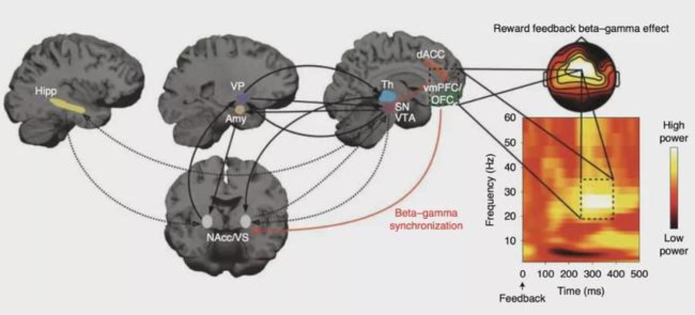 图|高频神经调节疗法电路模型(来源:Nature Medicine)