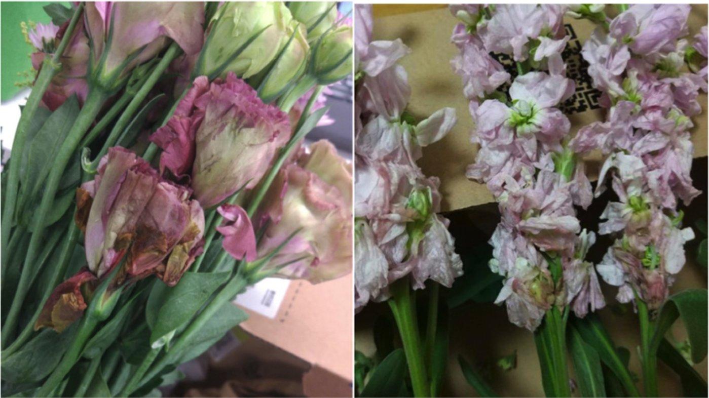 网友从花点时间购买的鲜花