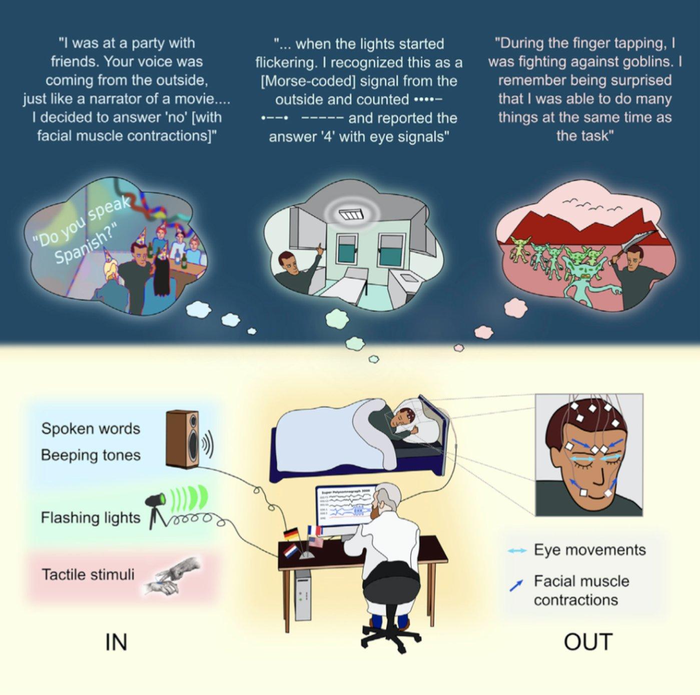 图 实验环境概述,IN(左下)是指信息从实验者传递到做梦者的方法;OUT(右下)指的是将信息从做梦者传递给实验者的方法。(来源:Current Biology)