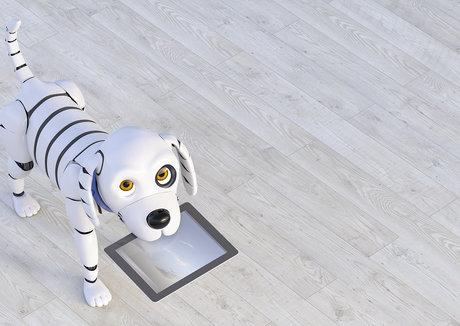 恋物志(一):网红带货,宠主追捧,2021年宠物智能硬件会火吗?