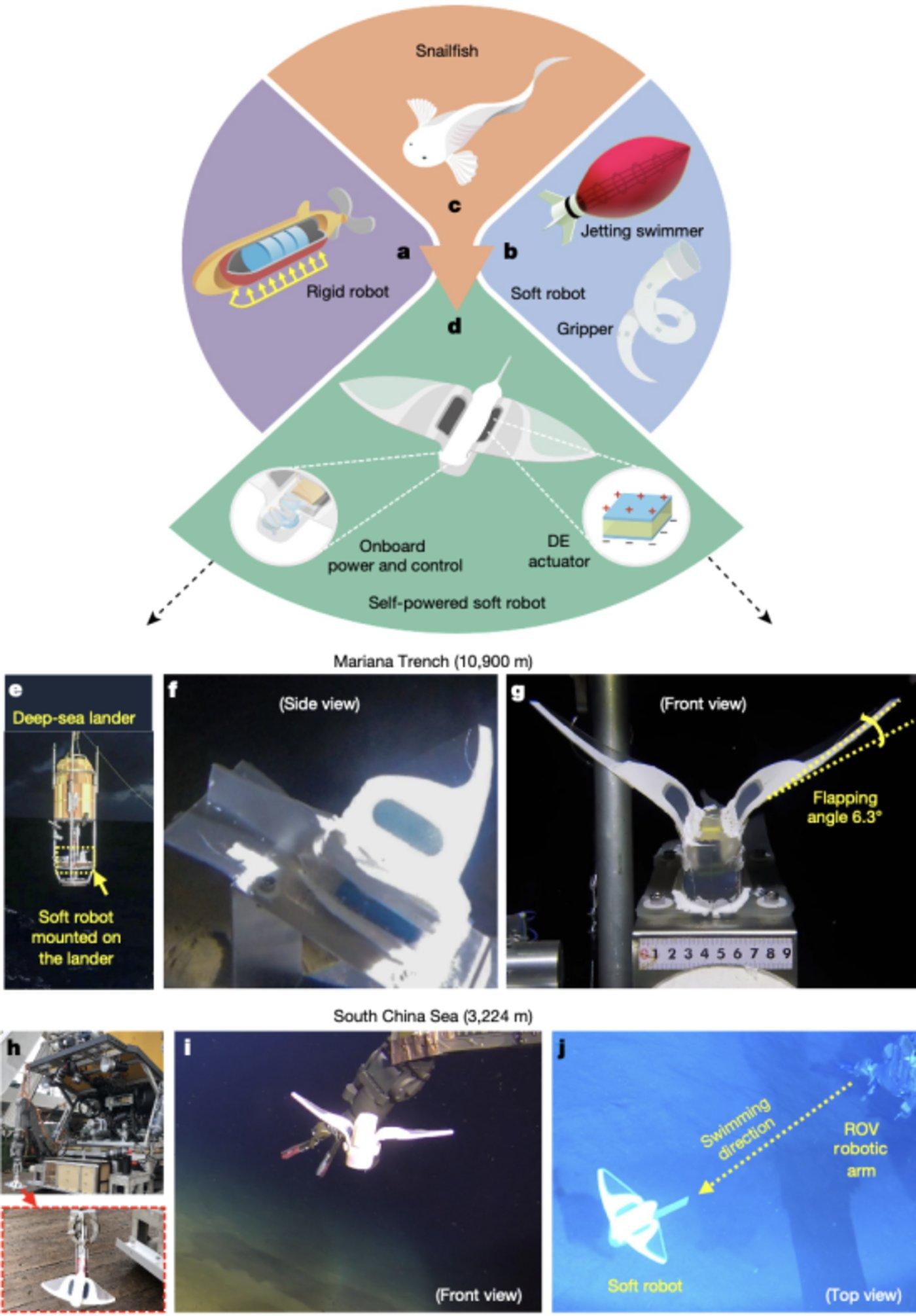 图|机器人设计与深海试验(来源:Nature)