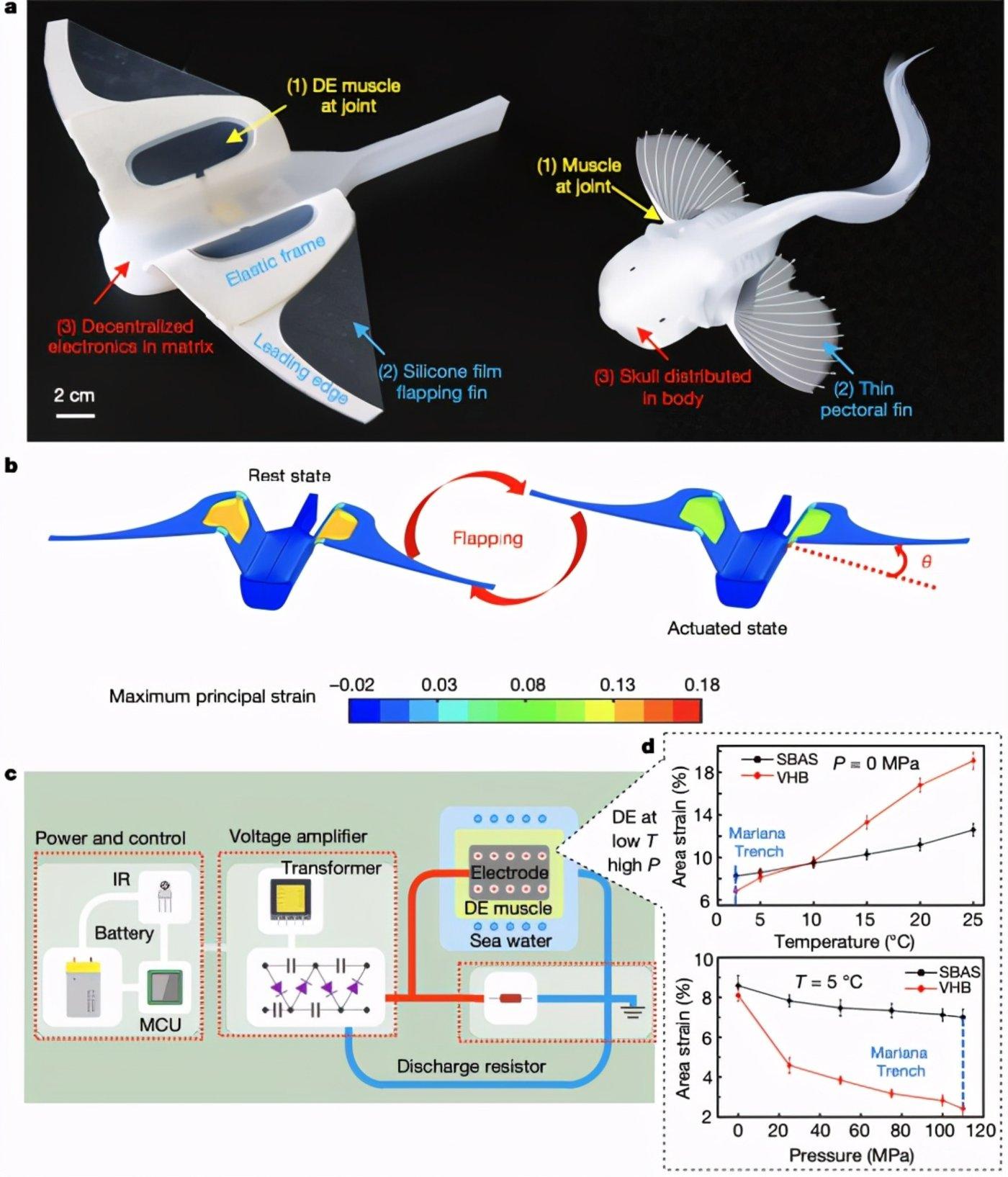 图|软机器人的设计与制造(来源:Nature)