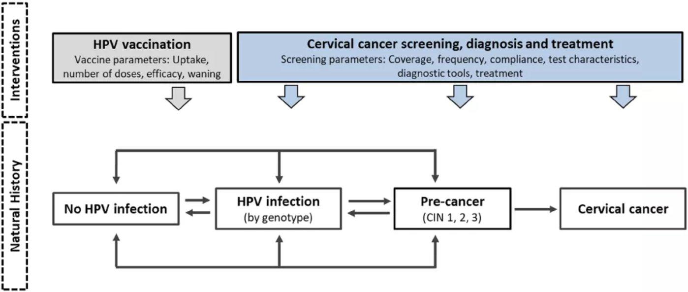 图   宫颈癌干预和监测建模网络(CISNET-Cervical)模型示意图(来源:论文)