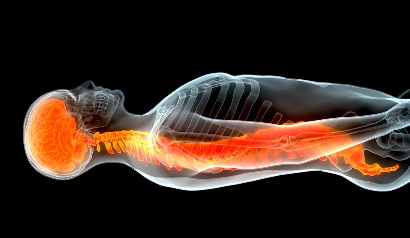 图|受伤脊髓修复(来源:Yale)
