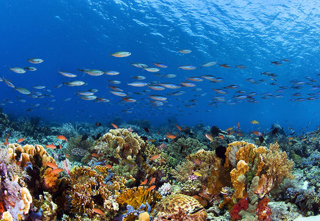 海洋公地的危机