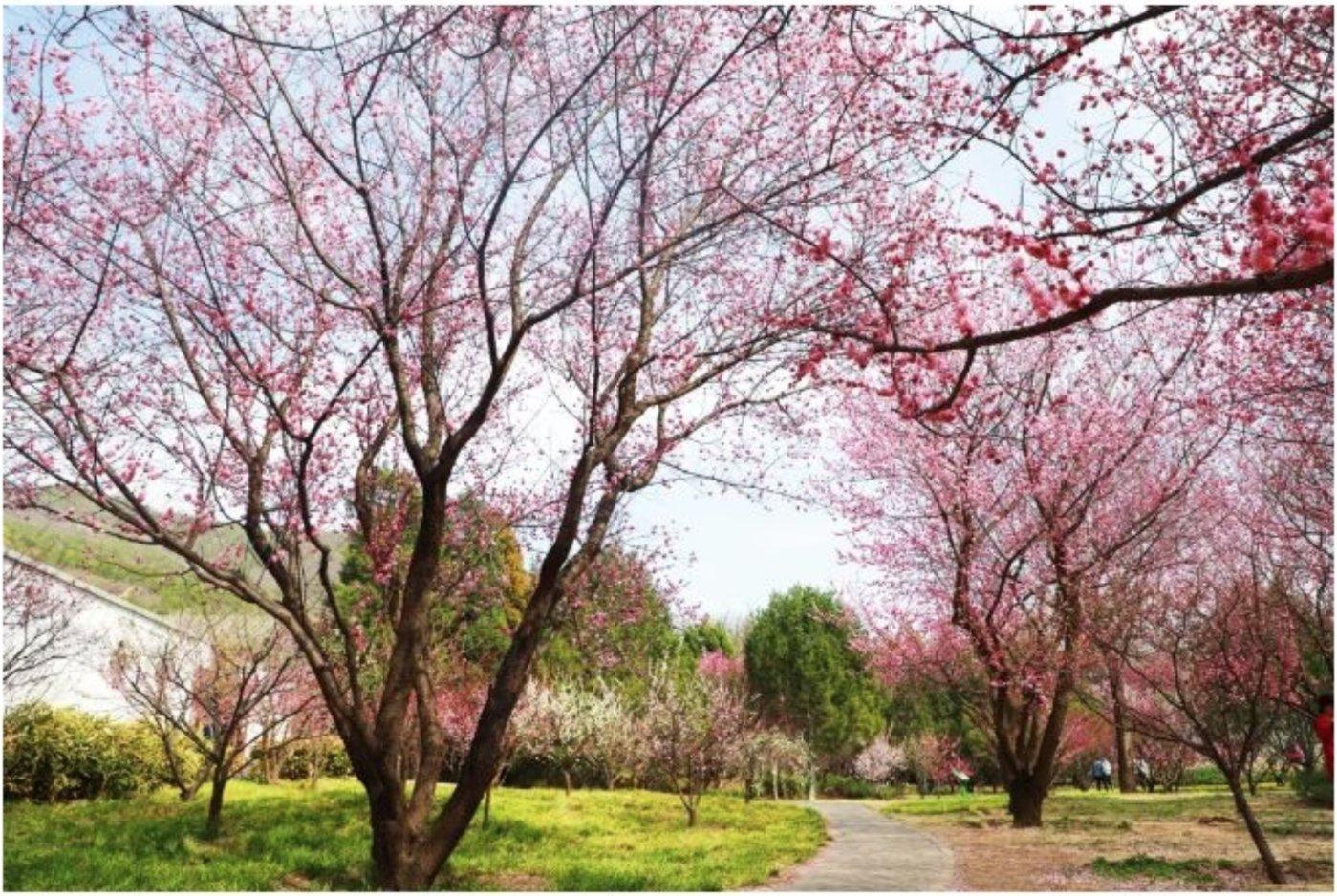 图片来源:北京植物园官网