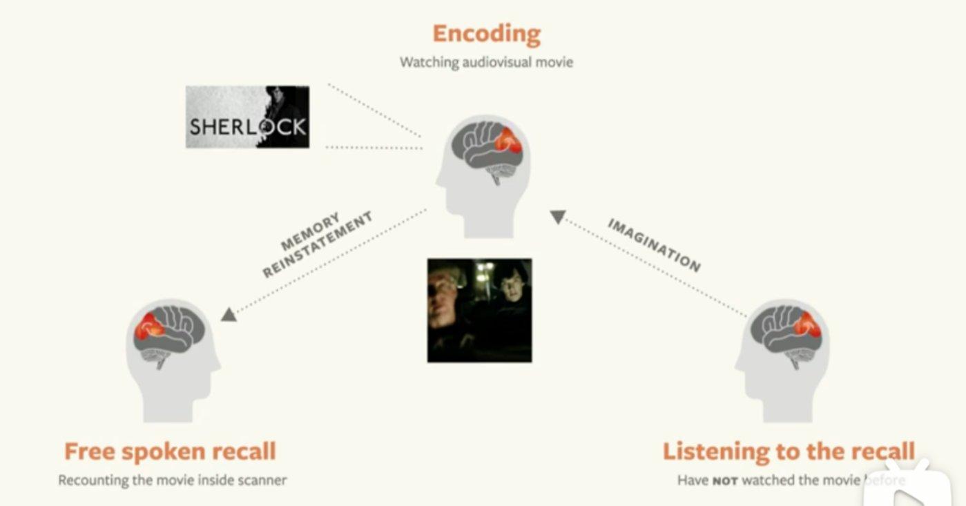 神经学家Uri Hasson从生理角度解读故事对于大脑的影响