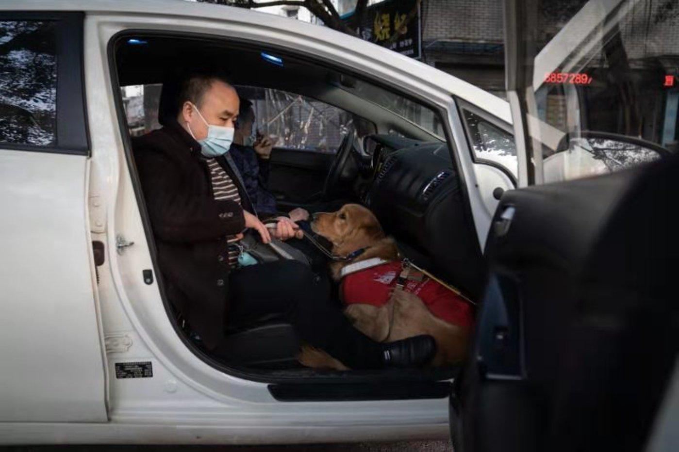 网约车上,导盲犬卧在黎洪身下