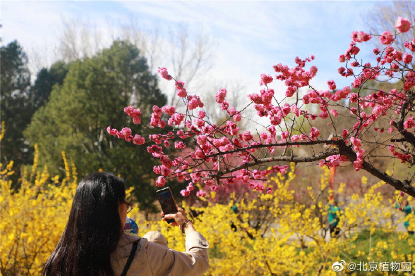 图片来源:北京植物园官微