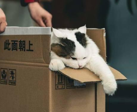 """憋死小动物的""""宠物盲盒"""",还在9块9叫卖"""