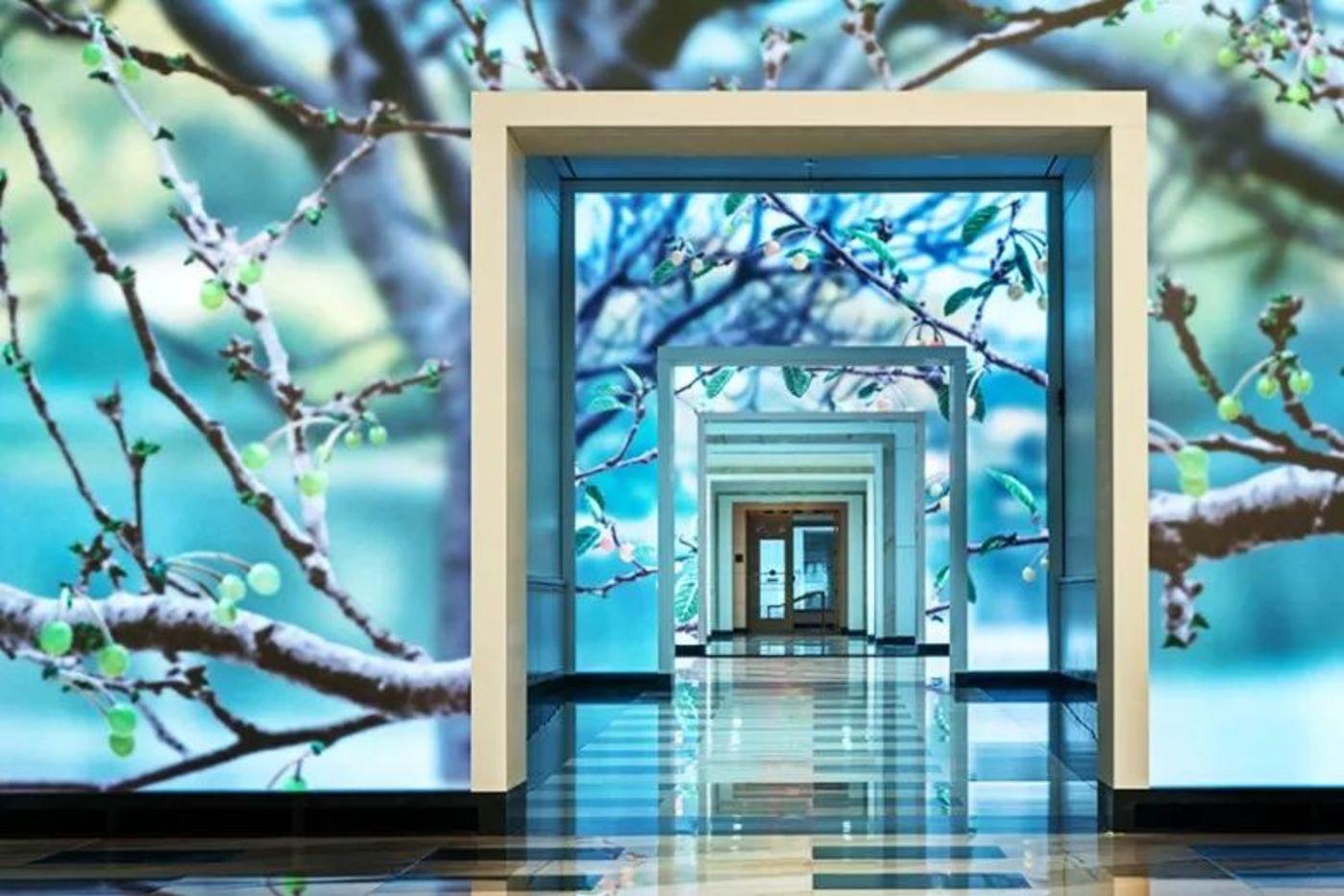互动屏幕《季节》,春天,当人们从屏幕面前走过,樱桃树便开始开花。