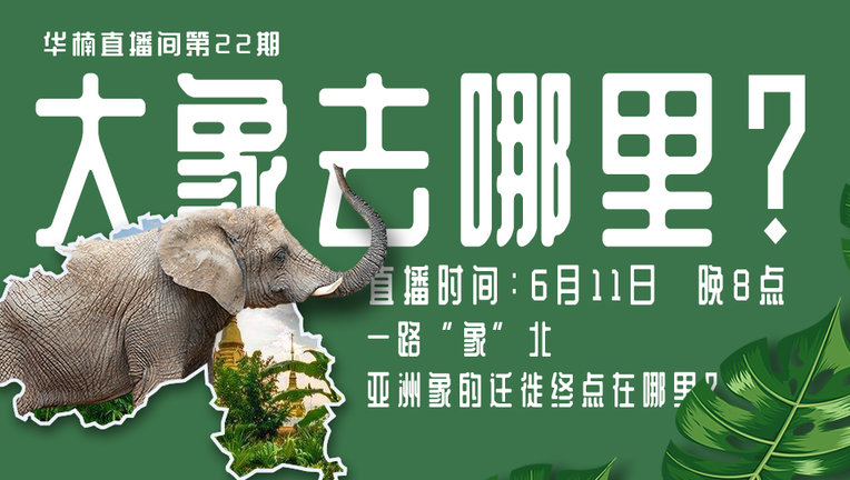 【华楠直播间】大象去哪里?