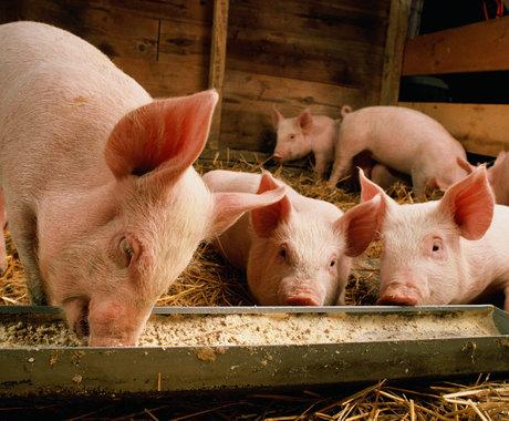 猪肉便宜了,为啥饭店还是一样贵?