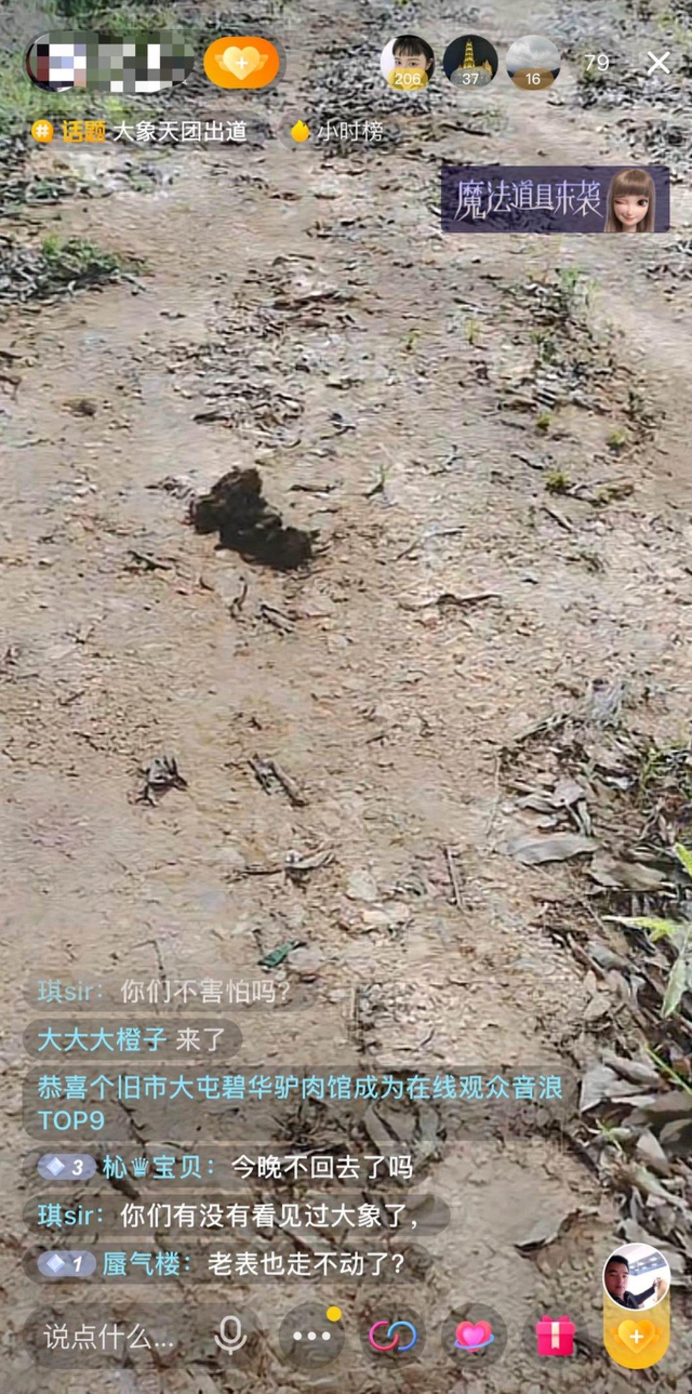 一位主播直播看大象粪便 来源 / 抖音截图