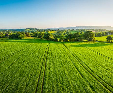 """动物肥胖基因也能让植物""""变胖""""?中美科学家成功使水稻、马铃薯增产3倍"""