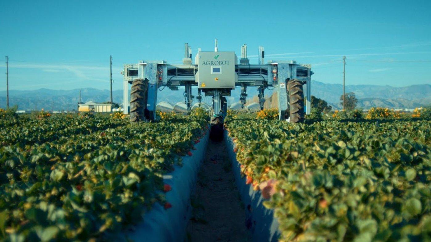 图 | Agrobot 草莓收割机器人(来源:Agrobot )
