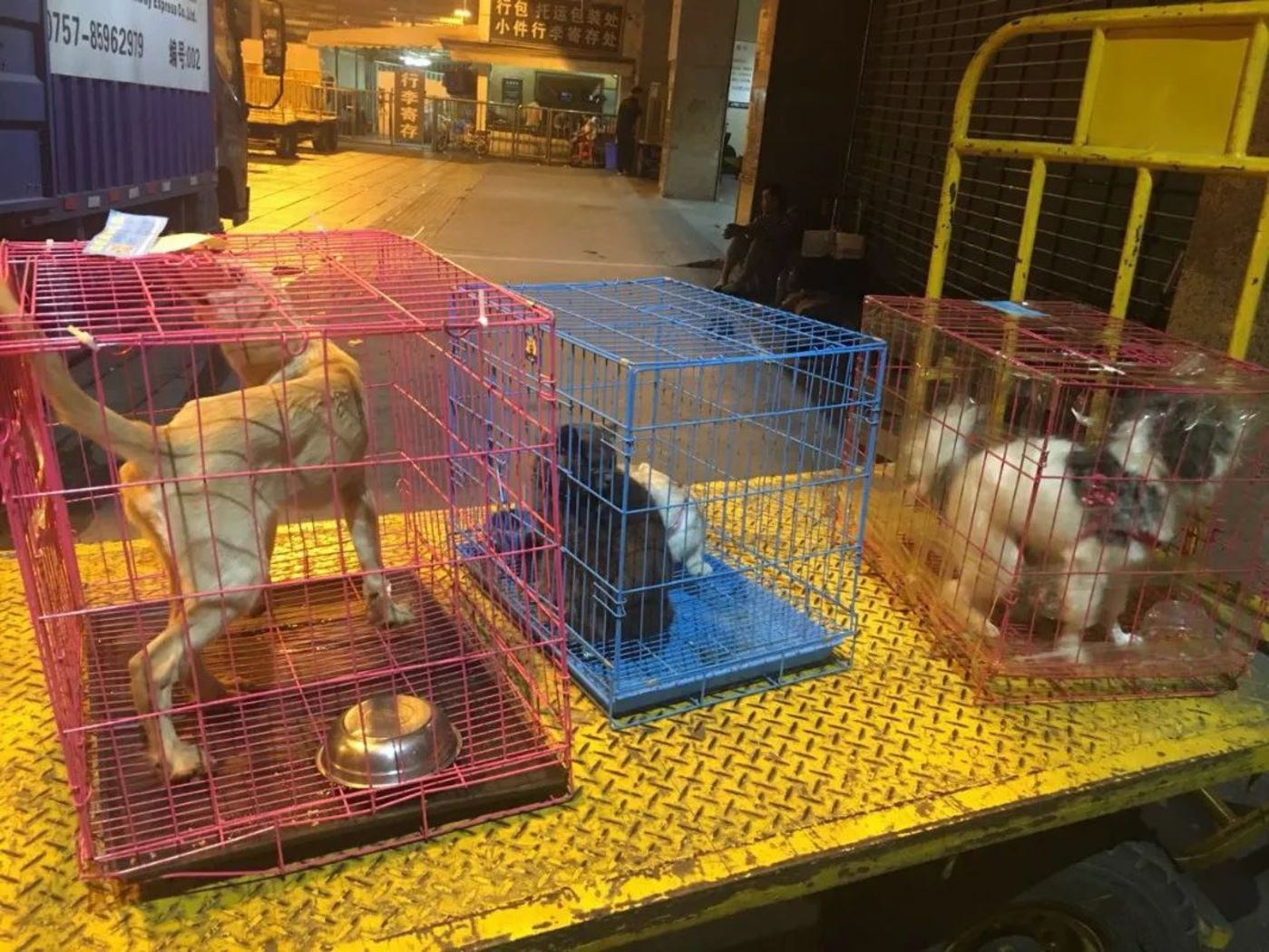宠物托运行业需要全新升级