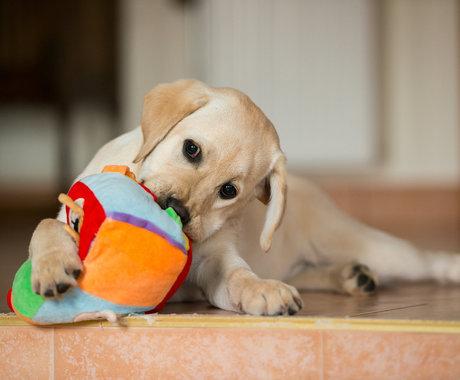 猫猫狗狗的千亿市场背后,谁能成为中国宠物行业的Chewy?