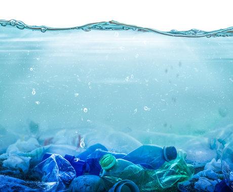 最新研究:塑料污染危及超过半数海洋鸟类,防治已刻不容缓