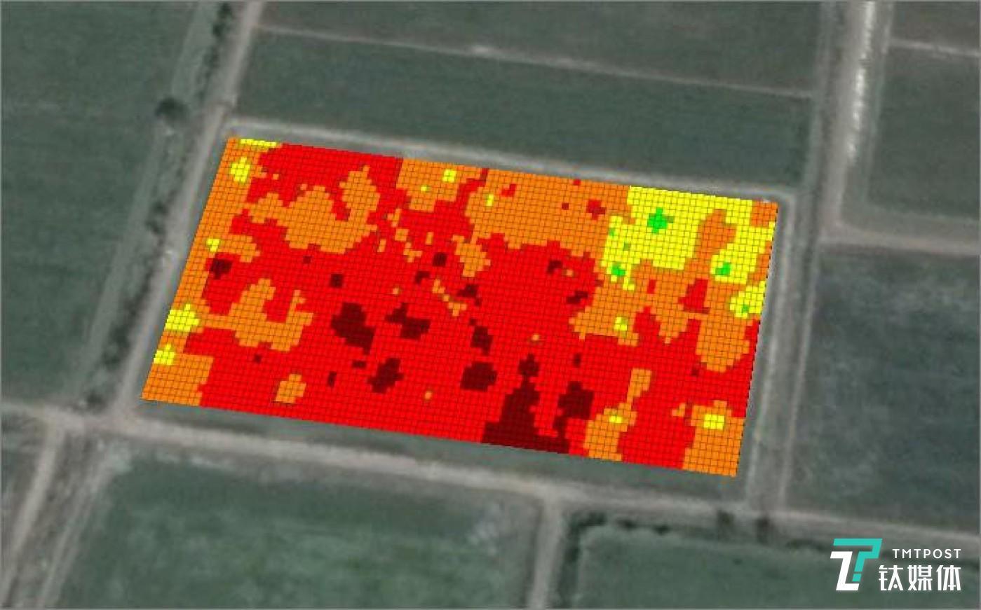 通过遥感技术,麦飞的监测机可以对农田病虫害情况进行识别,其中绿色就代表作物健康,