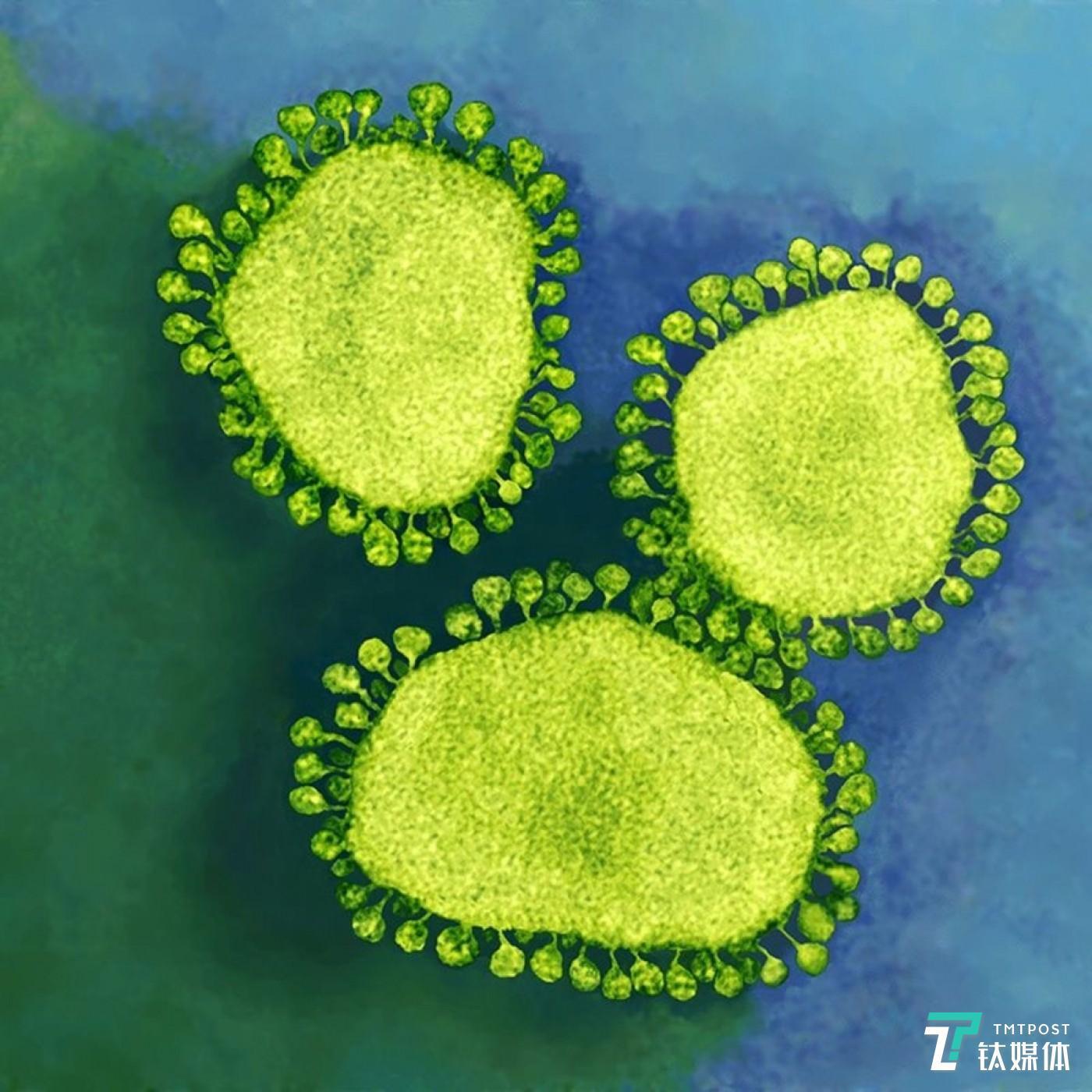 人体新冠病毒渲染图(来源:)