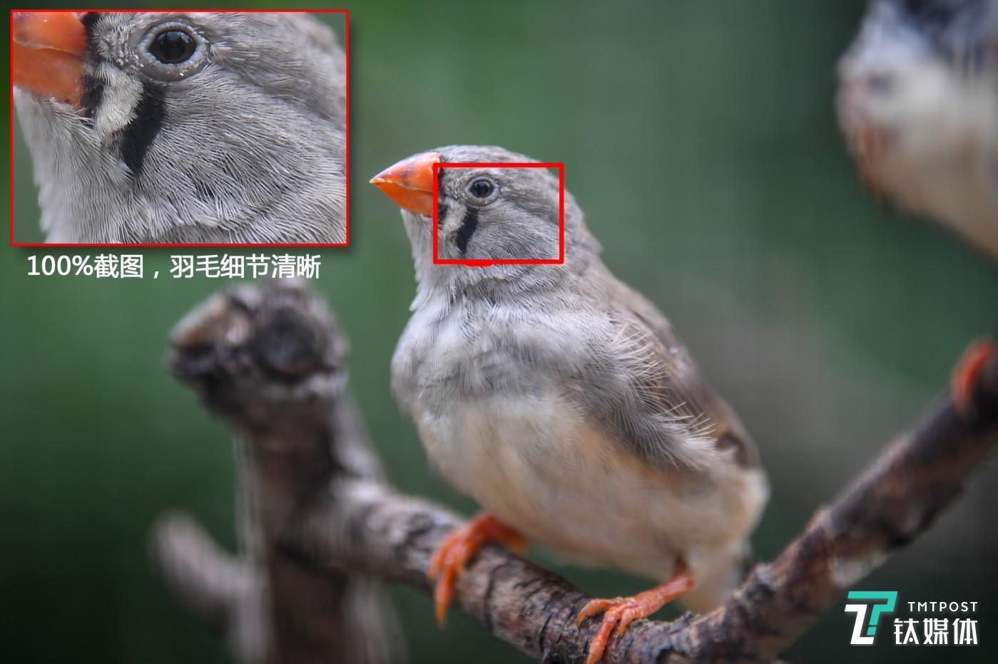 机身:佳能EOS 5DS 镜头:EF 70-200mm f/2.8L IS III USM 焦距:200mm 光圈:f/2.8 快门:1/160s ISO:1250