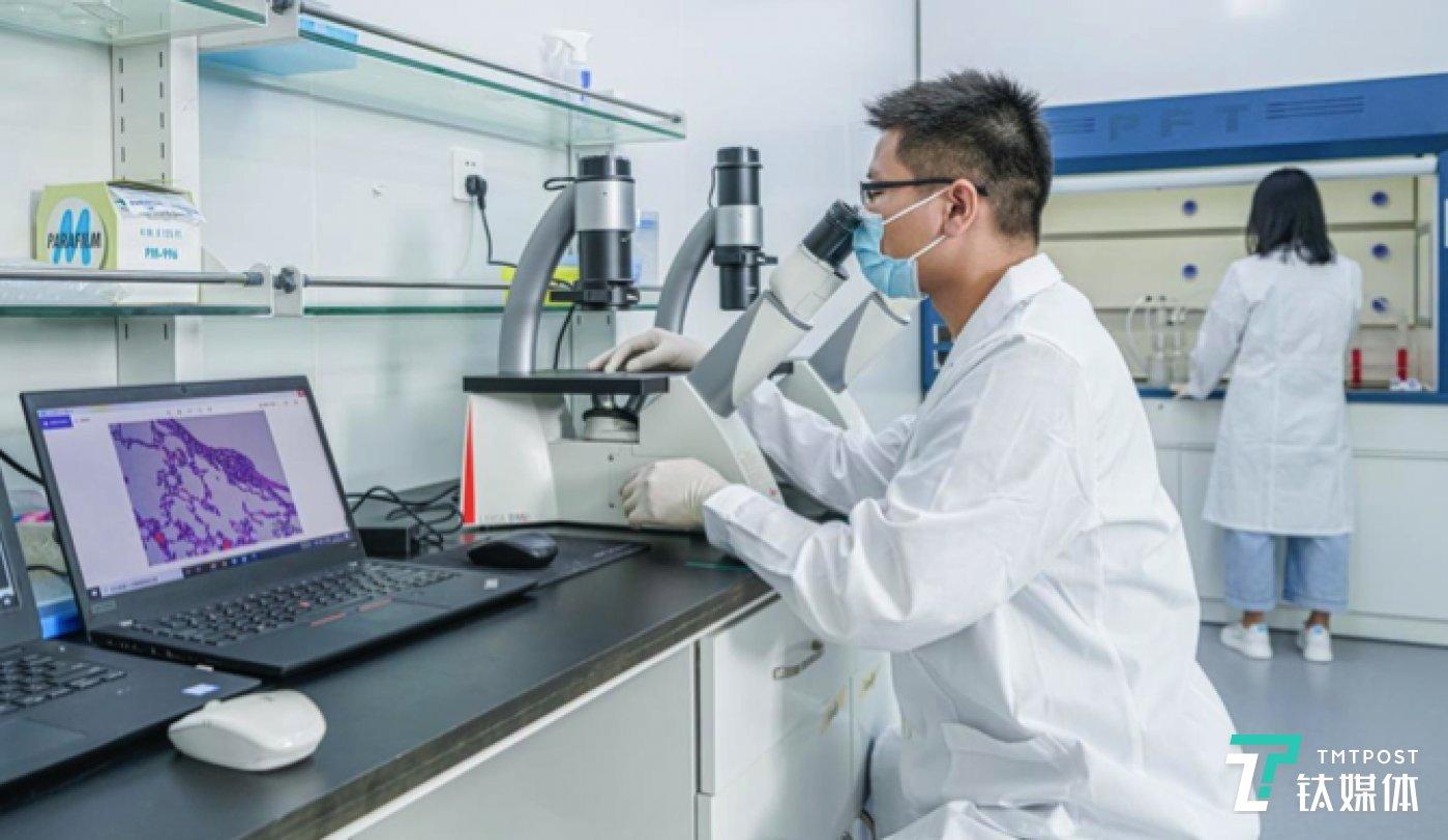 实验人员正在观察电子雾化器气溶胶对细胞组织的影响