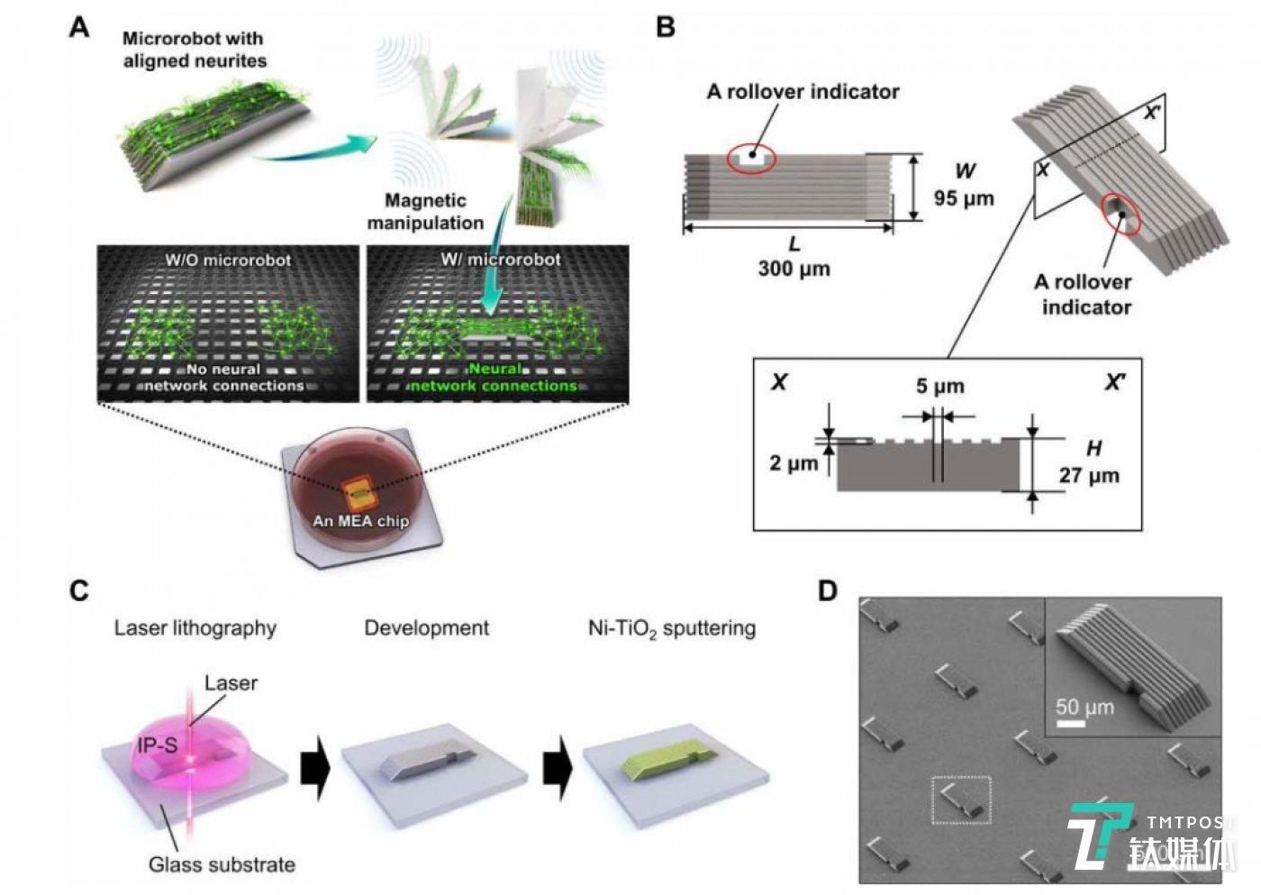 微型机器人的制造过程示意图(来源:论文)
